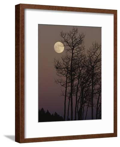 A Cluster of Aspens is Silhouetted against the Evening Sky-George F^ Mobley-Framed Art Print