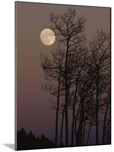 A Cluster of Aspens is Silhouetted against the Evening Sky-George F^ Mobley-Mounted Photographic Print