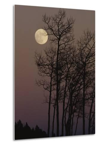 A Cluster of Aspens is Silhouetted against the Evening Sky-George F^ Mobley-Metal Print