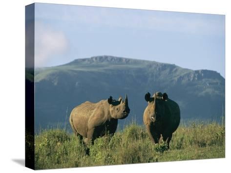 A Black Rhinoceros Cow and Her Calf-Chris Johns-Stretched Canvas Print