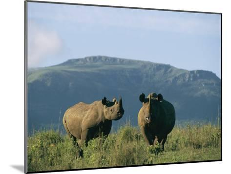 A Black Rhinoceros Cow and Her Calf-Chris Johns-Mounted Photographic Print