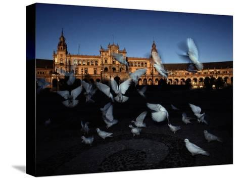 Pigeons in a Square in Seville-Steve Winter-Stretched Canvas Print