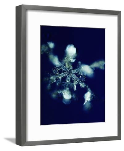 Close-up of a Snowflake-Robert Sisson-Framed Art Print