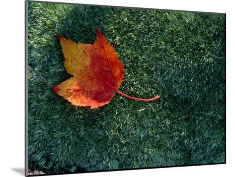 A Maple Leaf Lies on Emerald Moss in Autumn-George F^ Mobley-Mounted Photographic Print