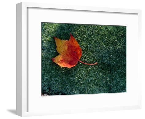 A Maple Leaf Lies on Emerald Moss in Autumn-George F^ Mobley-Framed Art Print