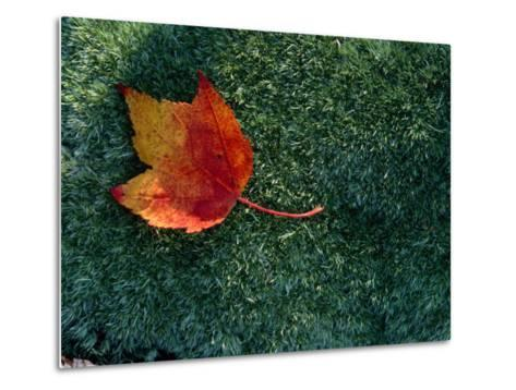 A Maple Leaf Lies on Emerald Moss in Autumn-George F^ Mobley-Metal Print