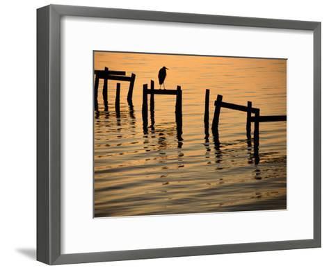 Heron on Dock-Joel Sartore-Framed Art Print