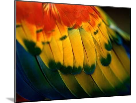Close View of the Wing of a Colorful Bird-Todd Gipstein-Mounted Photographic Print