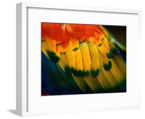 Close View of the Wing of a Colorful Bird-Todd Gipstein-Framed Art Print