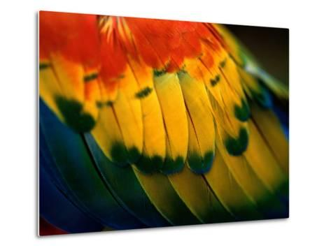 Close View of the Wing of a Colorful Bird-Todd Gipstein-Metal Print