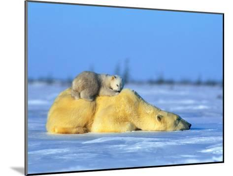 Polar Bear with Young-Norbert Rosing-Mounted Photographic Print