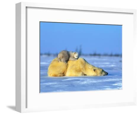 Polar Bear with Young-Norbert Rosing-Framed Art Print
