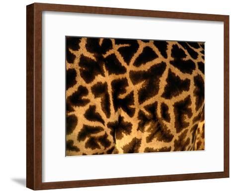 A Close View of a Giraffes Irregular Spots-Michael Nichols-Framed Art Print