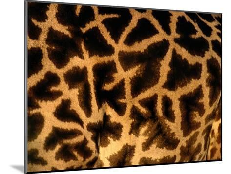 A Close View of a Giraffes Irregular Spots-Michael Nichols-Mounted Photographic Print