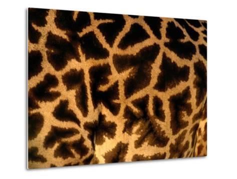 A Close View of a Giraffes Irregular Spots-Michael Nichols-Metal Print