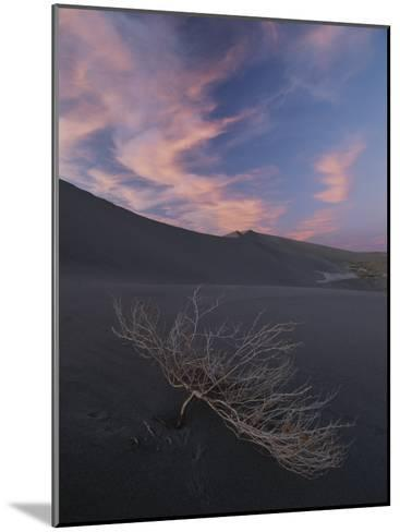 The Withered Branches of a Dead Shrub Lie on a Sand Dune-Michael Melford-Mounted Photographic Print