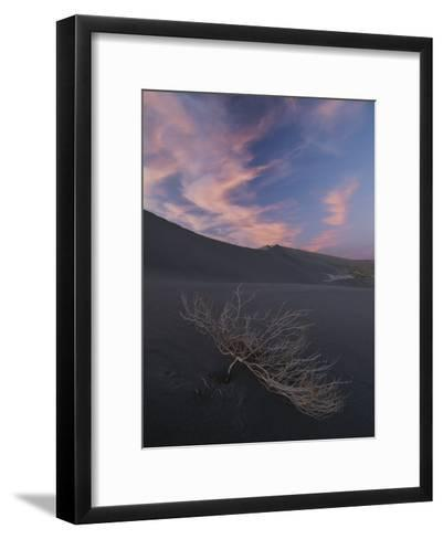 The Withered Branches of a Dead Shrub Lie on a Sand Dune-Michael Melford-Framed Art Print