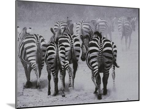 Zebras Kick up a Dust Storm as They Head out of the Area-Bobby Model-Mounted Photographic Print