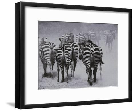 Zebras Kick up a Dust Storm as They Head out of the Area-Bobby Model-Framed Art Print