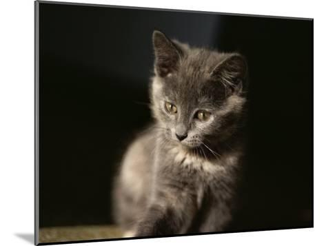 Close View of a Gray Kitten-Stephen St^ John-Mounted Photographic Print