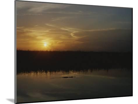 An Alligator in Silhouette Glides Through Wetlands at Sunset-Raul Touzon-Mounted Photographic Print