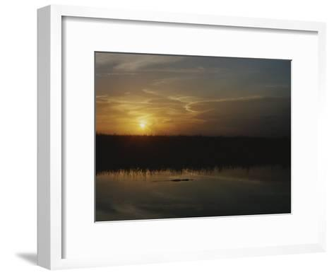 An Alligator in Silhouette Glides Through Wetlands at Sunset-Raul Touzon-Framed Art Print