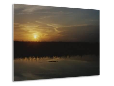 An Alligator in Silhouette Glides Through Wetlands at Sunset-Raul Touzon-Metal Print