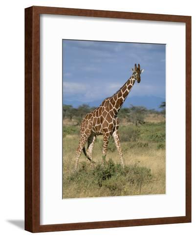 A Reticulated Giraffe on a Samburu Savanna-Roy Toft-Framed Art Print