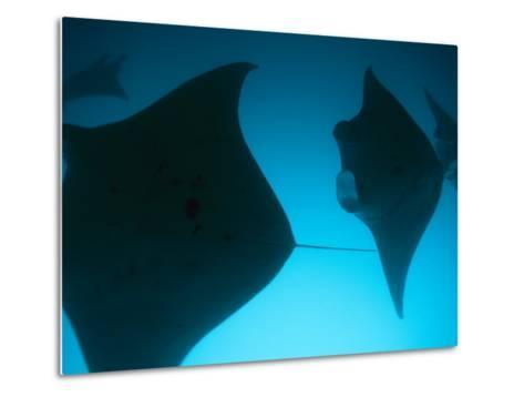 A Group of Silhouetted Manta Rays Swimming Gracefully-Heather Perry-Metal Print
