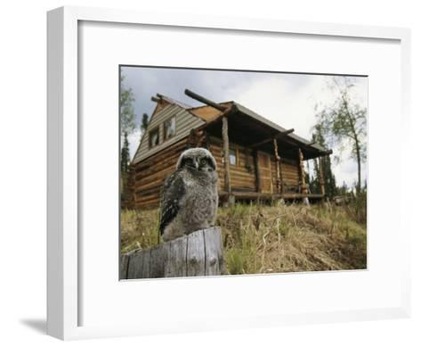 A Hawk Owl Sits on a Stump Near a Log Cabin-Michael S^ Quinton-Framed Art Print