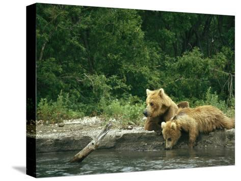 Brown Bear Cubs Resting on a River Bank-Klaus Nigge-Stretched Canvas Print