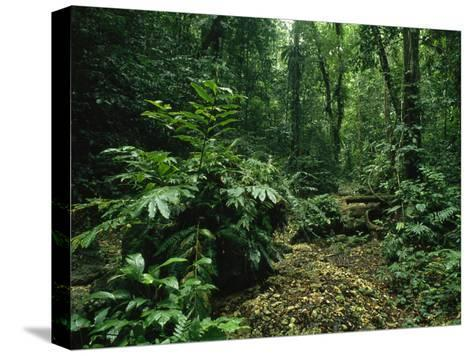 Lush Woodland View in Papua New Guinea-Klaus Nigge-Stretched Canvas Print