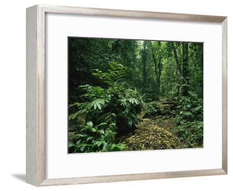 Lush Woodland View in Papua New Guinea-Klaus Nigge-Framed Art Print