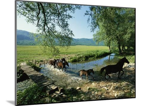 Wild Horses Cross a Stream on a High Plain Surrounded by Mountains-O^ Louis Mazzatenta-Mounted Photographic Print