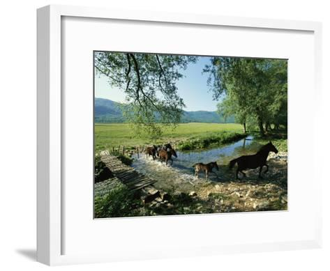 Wild Horses Cross a Stream on a High Plain Surrounded by Mountains-O^ Louis Mazzatenta-Framed Art Print