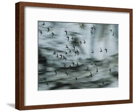 Swifts Fly Out of the Cave-Stephen Alvarez-Framed Art Print