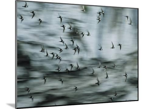 Swifts Fly Out of the Cave-Stephen Alvarez-Mounted Photographic Print