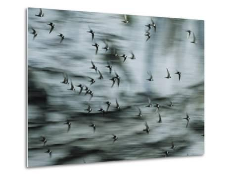Swifts Fly Out of the Cave-Stephen Alvarez-Metal Print