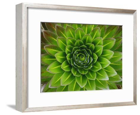 A Giant Lobelia Plant-George F^ Mobley-Framed Art Print