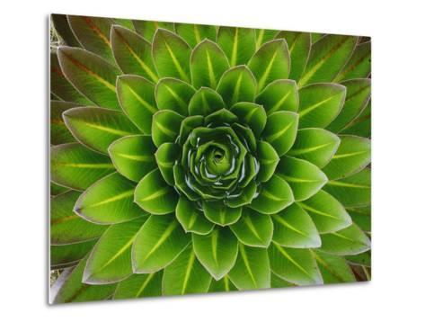 A Giant Lobelia Plant-George F^ Mobley-Metal Print