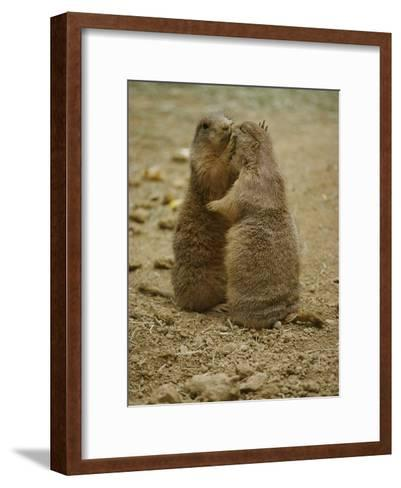National Zoo Prairie Dogs Show Affection by Kissing-Brian Gordon Green-Framed Art Print