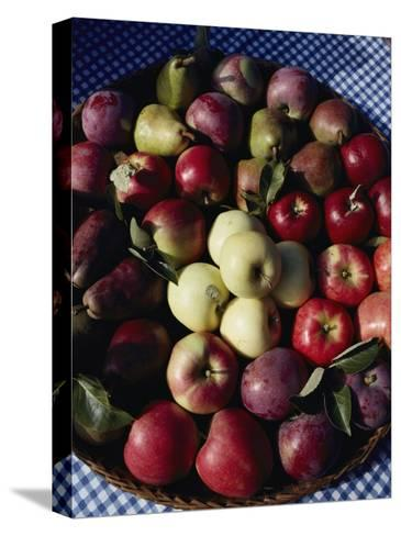 Pears and Varieties of Apples in a Bowl at the Tilth Festival in Seattle-Sam Abell-Stretched Canvas Print
