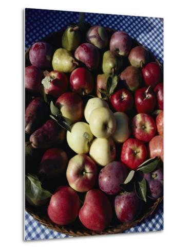 Pears and Varieties of Apples in a Bowl at the Tilth Festival in Seattle-Sam Abell-Metal Print