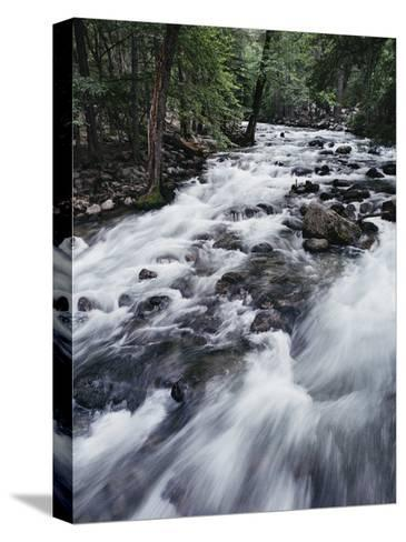 A Shallow Woodland Stream Tumbles over its Rocky Bed-Melissa Farlow-Stretched Canvas Print
