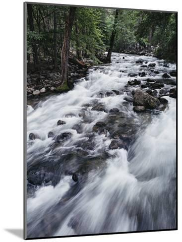 A Shallow Woodland Stream Tumbles over its Rocky Bed-Melissa Farlow-Mounted Photographic Print