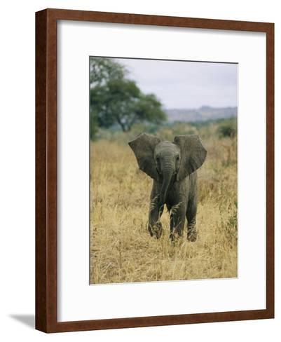 A Juvenile African Elephant Takes a Walk-Roy Toft-Framed Art Print