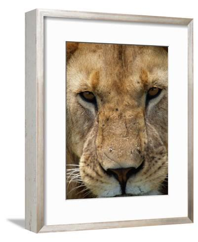 Close View of a Male Lion (Panthera Leo)-Beverly Joubert-Framed Art Print