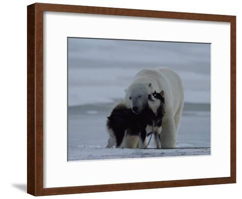 A Polar Bear (Ursus Maritimus) and a Husky Cuddle up to Each Other in the Snow-Norbert Rosing-Framed Art Print