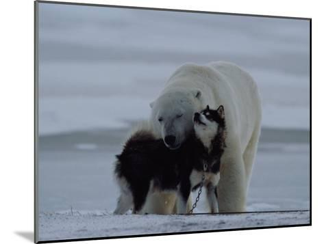 A Polar Bear (Ursus Maritimus) and a Husky Cuddle up to Each Other in the Snow-Norbert Rosing-Mounted Photographic Print