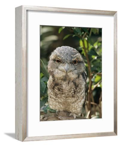 Tawny Frogmouth Bird-George Grall-Framed Art Print
